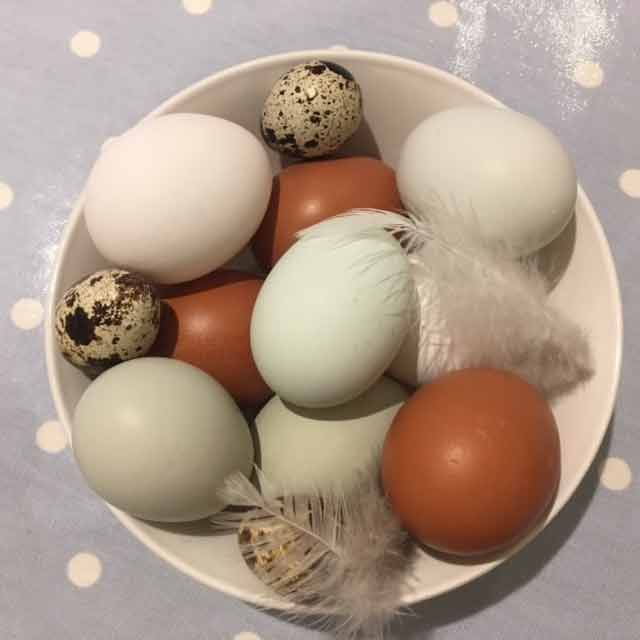 photo of beech eggs