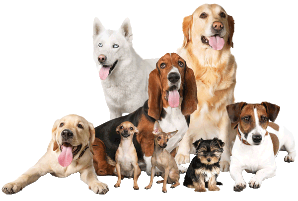 Group Photo of Dogs for Country Pet Supplies Dog section