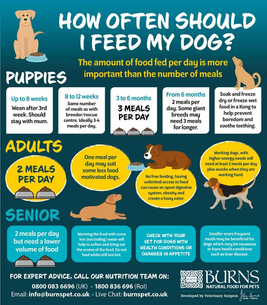 How often to feed your dog image