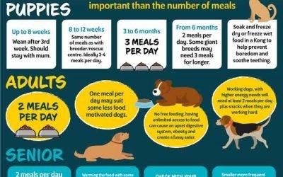 How often Should I feed my Dog