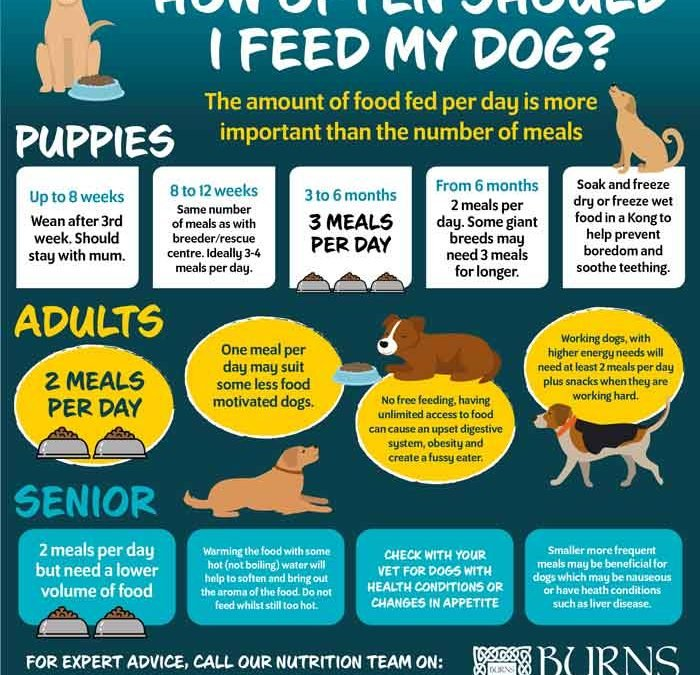how often to feed your dog