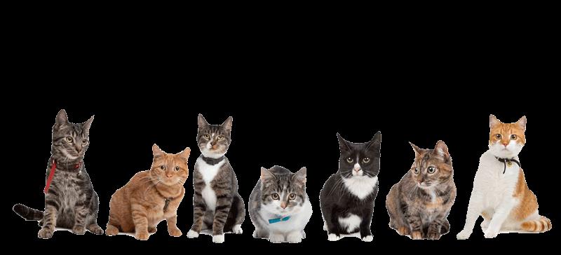 Pet cat supplies Sonning Common