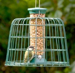 photo of bird feeding