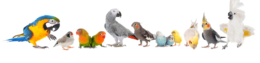 group of caged birds budgies and parrots sonning pet country supplies